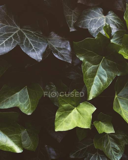 Green summer leaves background — Stock Photo