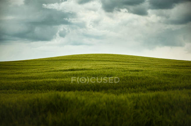 Moody sky over  field — Stock Photo