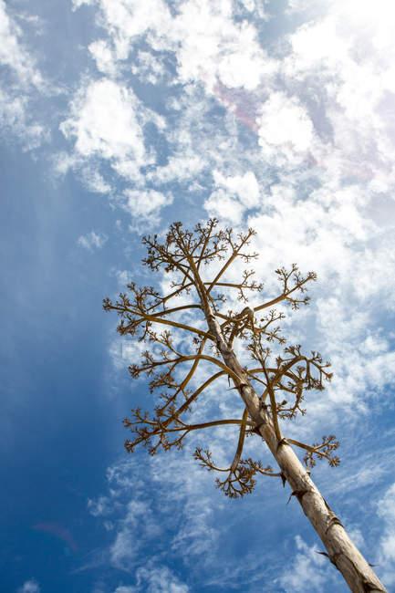 Денного низький кут зору дерево з хмари в Синє небо — стокове фото