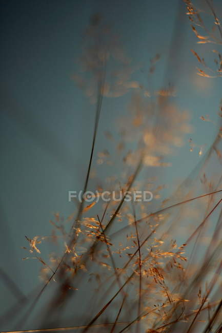 Dry herbs, selective focus — Stock Photo
