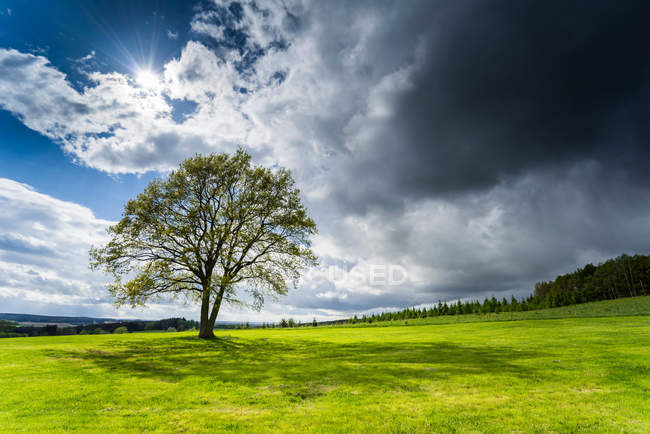 Landscape with field view and tree — Stock Photo