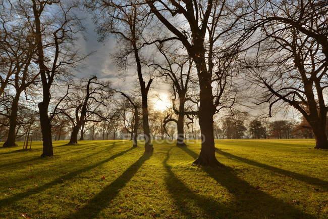 Восход солнца в зелёный луг с деревьями — стоковое фото