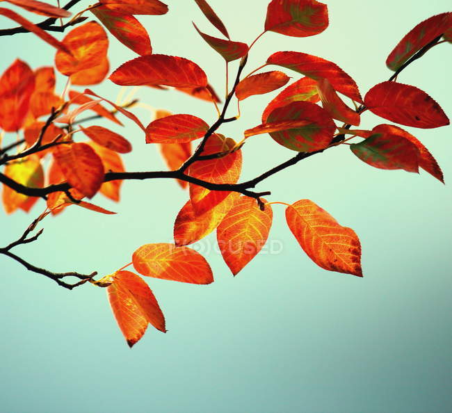 Yellow leaves on the tree branch — Stock Photo