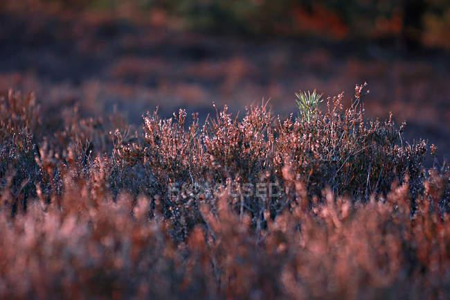 Крупным планом вид луговых растений с росой в утреннем свете — стоковое фото