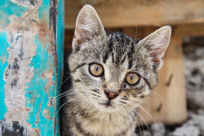 Chaton tigré rayée — Photo de stock