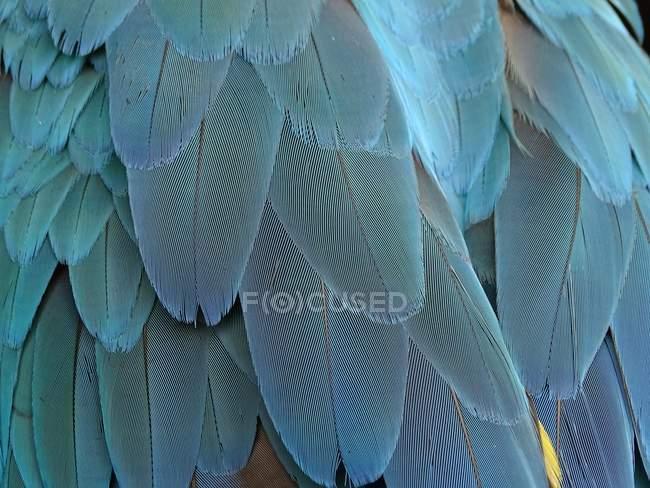 Vista del primo piano delle piume di pappagallo — Foto stock