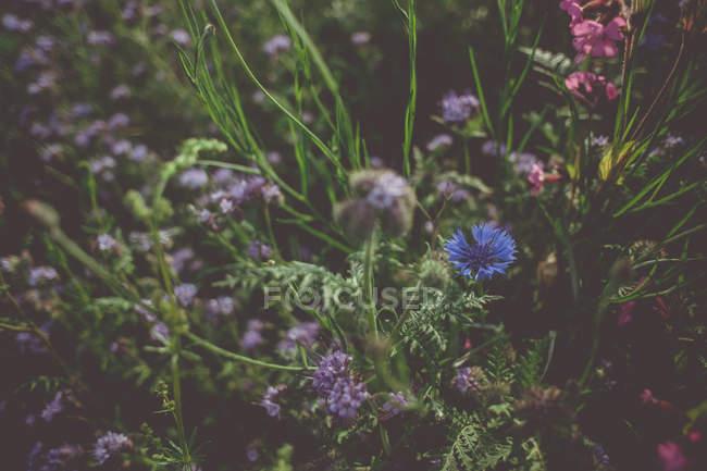 Летом зеленой травы и подал цветы — стоковое фото