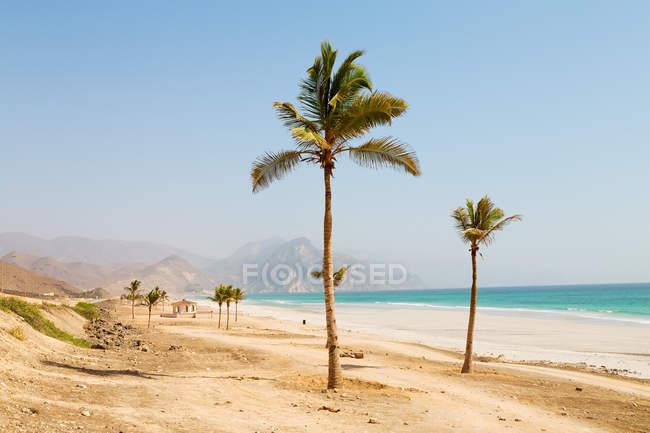 Долоні на піщаний пляж — стокове фото