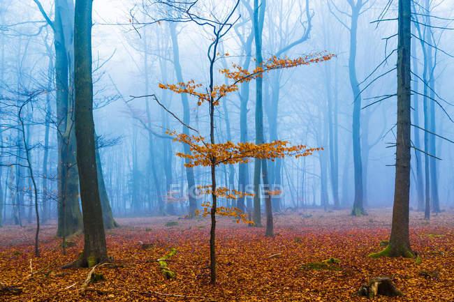 Крошечные дерево с красочные листья — стоковое фото