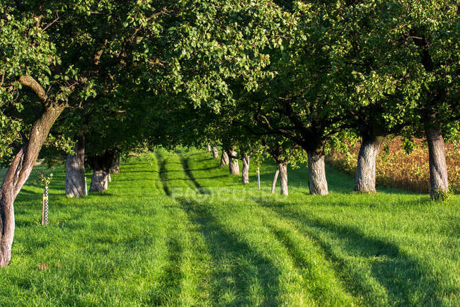 Green summer grass in garden with trees — Stock Photo
