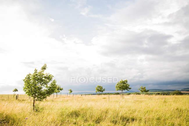 Landschaft mit getrockneten Wiese — Stockfoto