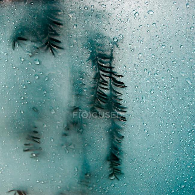 Nahaufnahme von Nadel-Zweigen in gefrorenem Wasser — Stockfoto