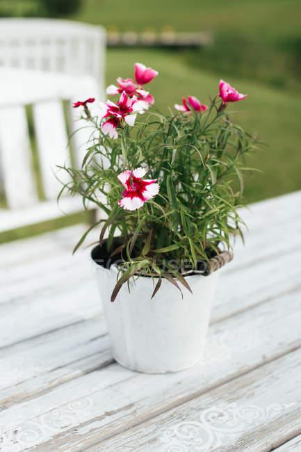 Wachsende Zimmerpflanze mit Blumen im Topf auf hölzernen Tisch im freien — Stockfoto