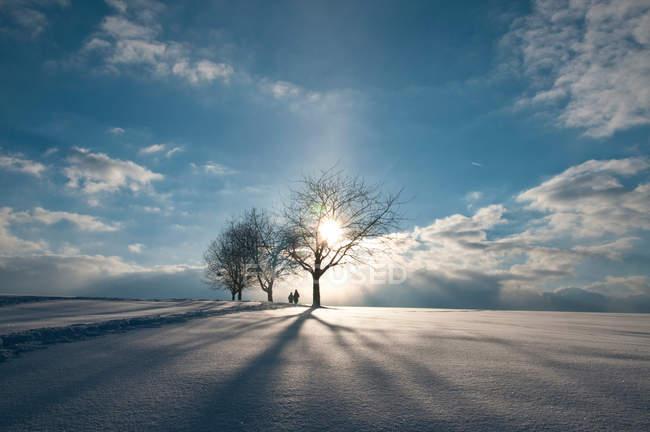 Зимний сезон пейзаж с силуэтами деревьев и людей — стоковое фото