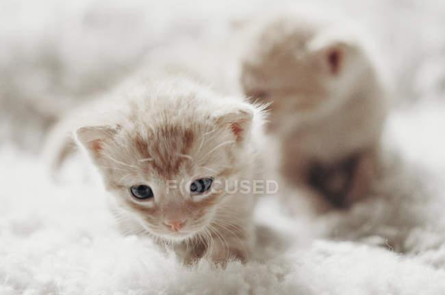 Kätzchen sitzen auf Decke — Stockfoto