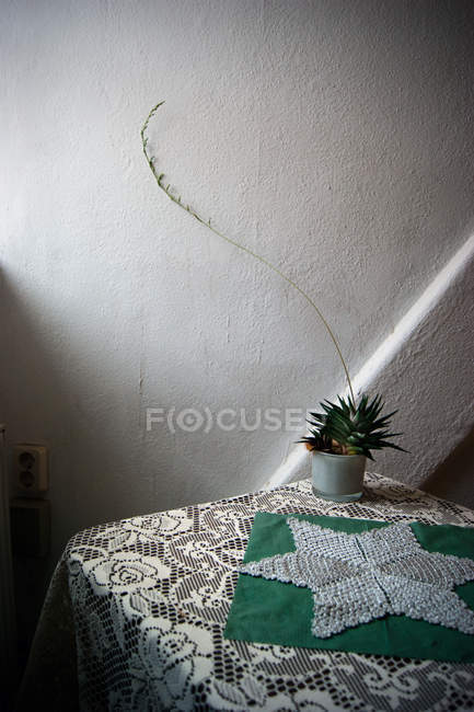 Growing houseplant in pot on table in room — Stock Photo