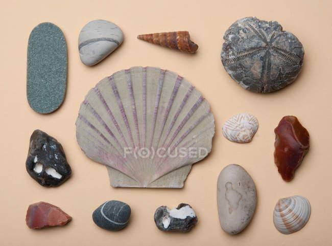 Stillleben mit Meer-Steinen und Muscheln auf Tisch — Stockfoto