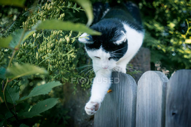 Cat jumping from fence — Stock Photo
