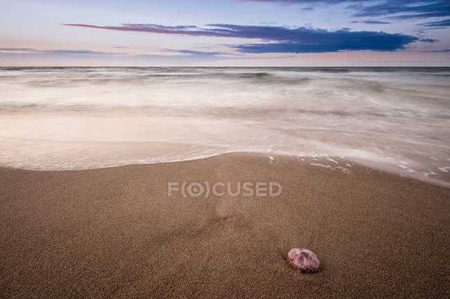 Jellyfish on sandy beach — Stock Photo