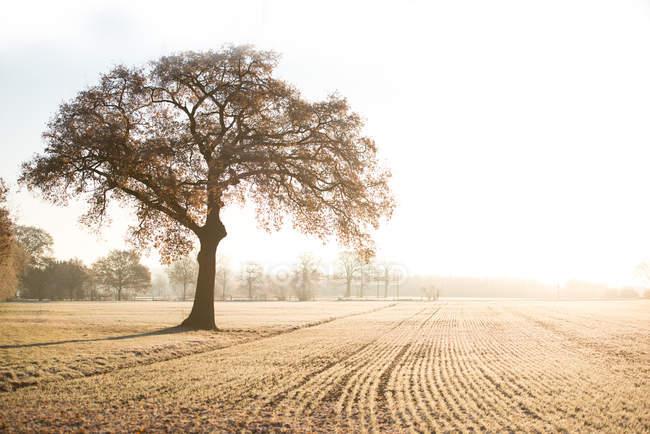Природа пейзаж с видом на живописные поля с деревьями в солнце — стоковое фото