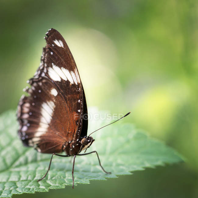 Green summer leaf and butterfly — Stock Photo