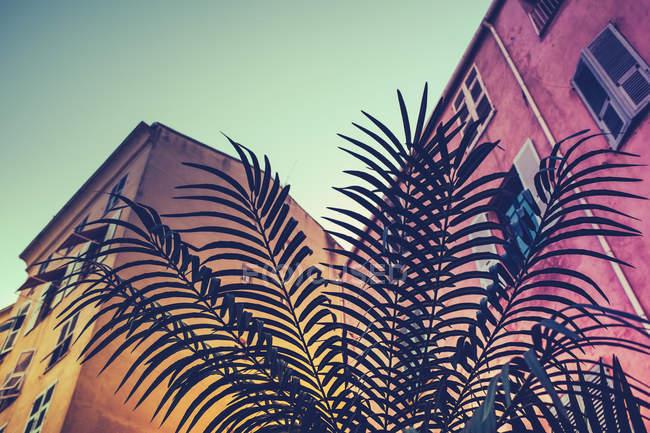 Пальмовых листьев и жилой дом здания Бастия, Корсика — стоковое фото