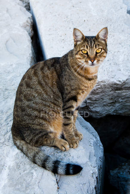 Short-haired brown cat — Stock Photo