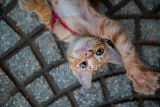 Gato deitado na calçada — Fotografia de Stock