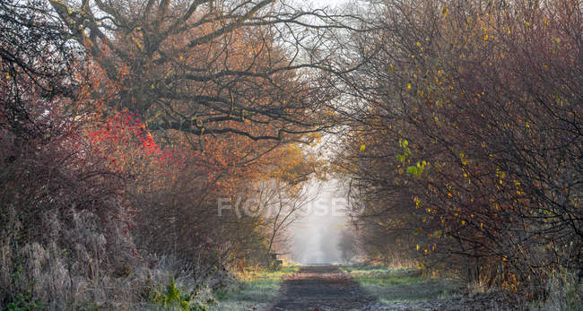Path in autumn forest in foggy weather — Stock Photo