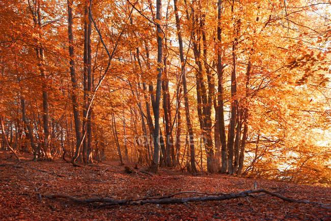 Autunmnal лесной вид в солнечную погоду — стоковое фото