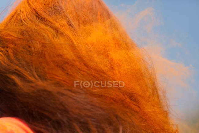 Color powder in Womans Hair — Stock Photo
