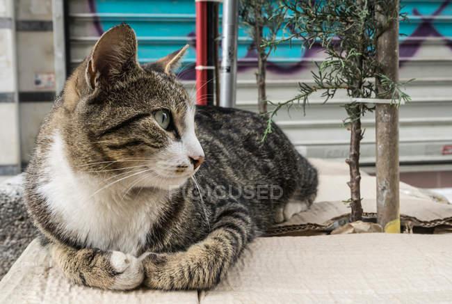 Gatto che si siede su cartone — Foto stock