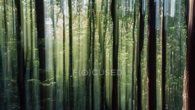 Green forest at summer — Stock Photo