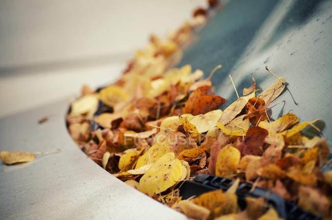 Autumnal leaves on car hood — Stock Photo