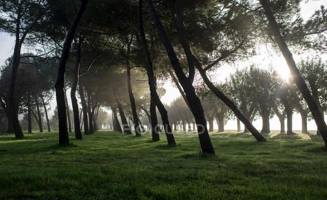 Prado de verão verde com árvores e raios solares — Fotografia de Stock