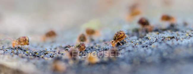 Closeup de insectos colémbolos en madera superficie agazapado - foto de stock