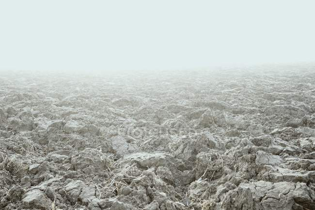 Frosty ground in foggy weather — Stock Photo