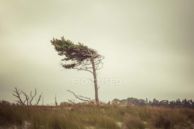 PIN par temps orageux venteux — Photo de stock