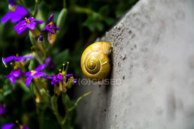 Крупным планом улитки корпуса, цветущие цветы на фоне — стоковое фото