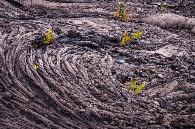 Closeup of cold lava pattern with plants — Stock Photo