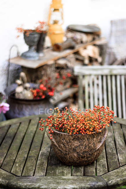 Rowanberry branches and berries in old ceramic bowl on shabby wooden table — Stock Photo