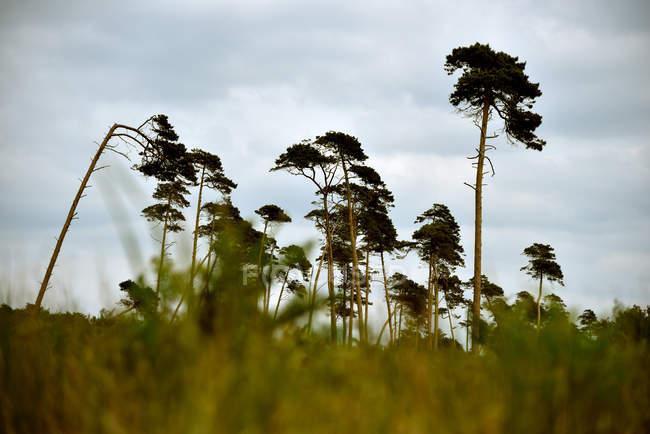 Grama verde no campo crescente — Fotografia de Stock