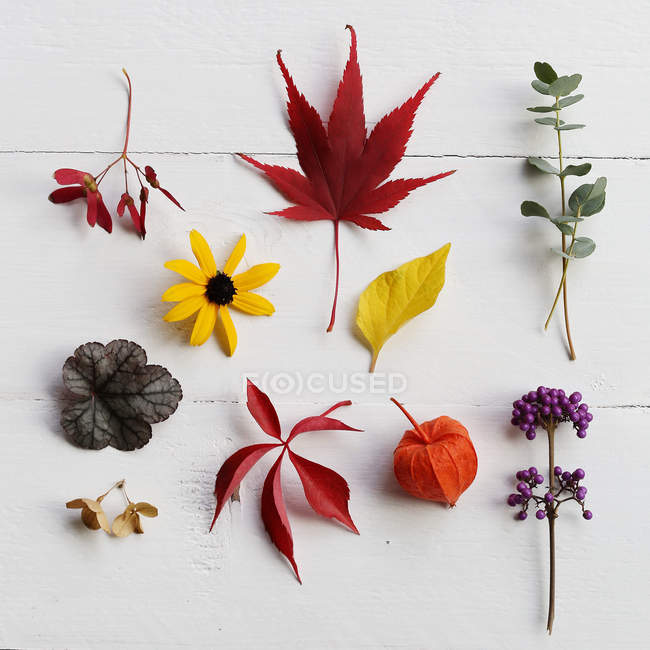 Stillleben mit Blumen und Blätter auf Tisch — Stockfoto