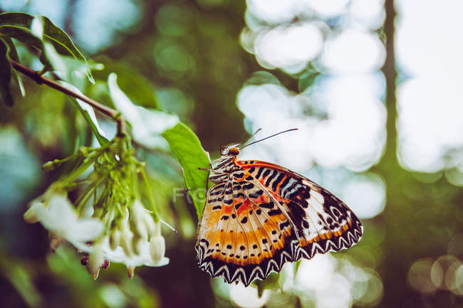 Green summer leaves and butterfly — Stock Photo