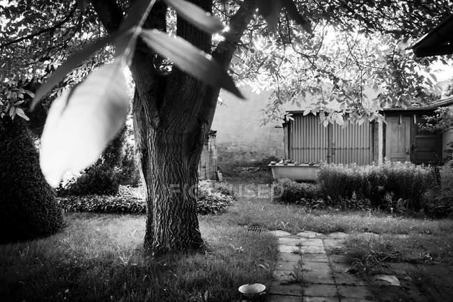 Дерев'яна хата в саду, горіхових дерев на передньому плані — стокове фото