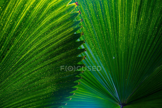 Green exotic tropical tree leaves as background — Stock Photo