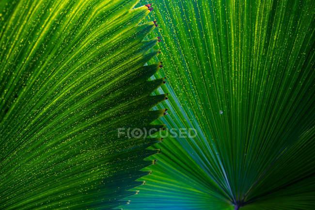 Grüne exotischen tropischen Baum Blätter als Hintergrund — Stockfoto