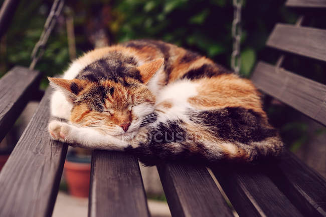 House cat lying on bench — Stock Photo