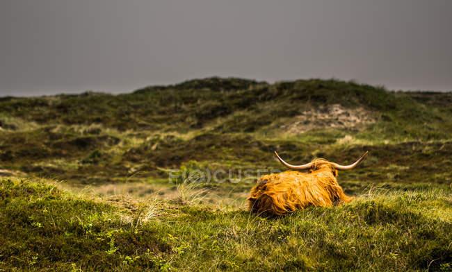 Bestiame sul prato al sole — Foto stock