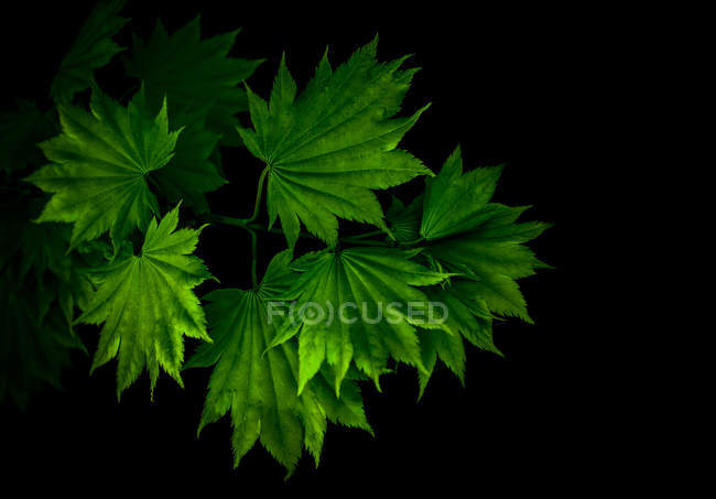 Green leaves on tree branches — Stock Photo